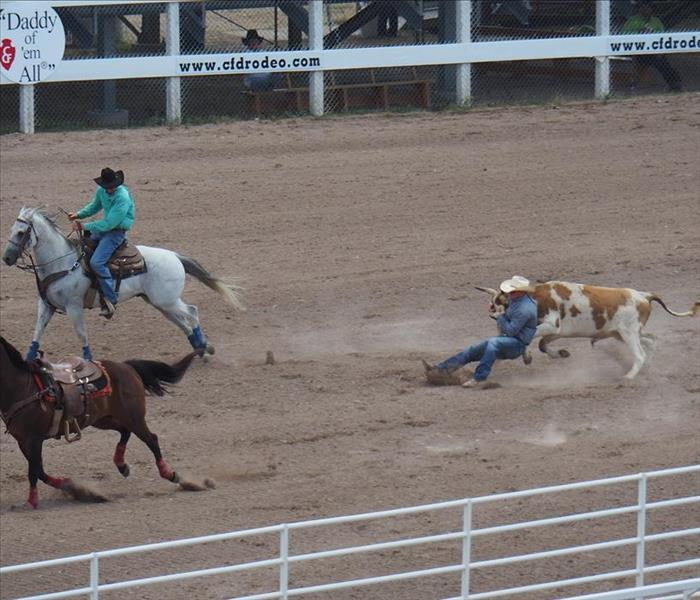 At a rodeo. A cowboy on a grey horse, another cowboy roping a brown and white steer. A brown horse without a rider.